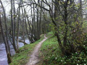 forest-sweden